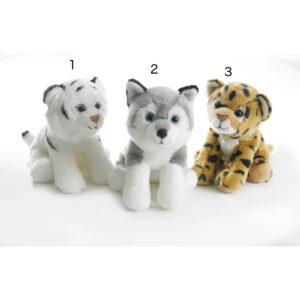 Husky, Gepard, Hvid Tiger