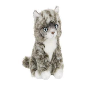 Amerikansk korthåret kat